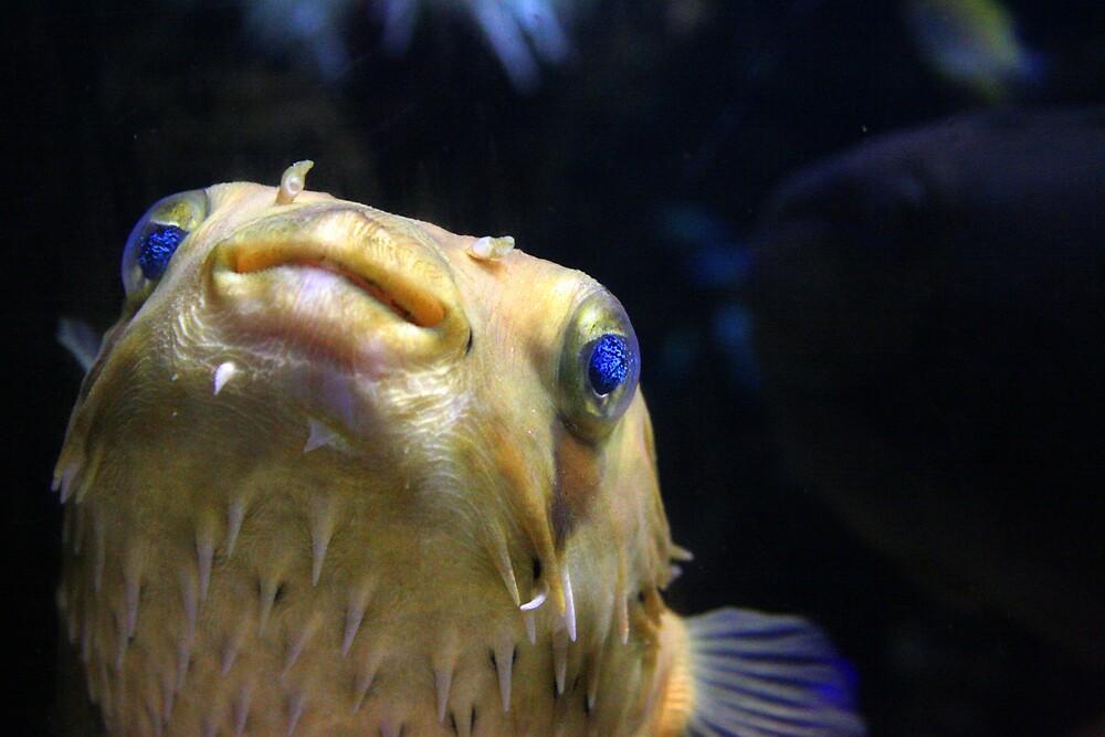 Porcupine fish by David Elliott