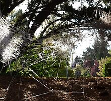 Installation Art in Trees by Leah Hislop