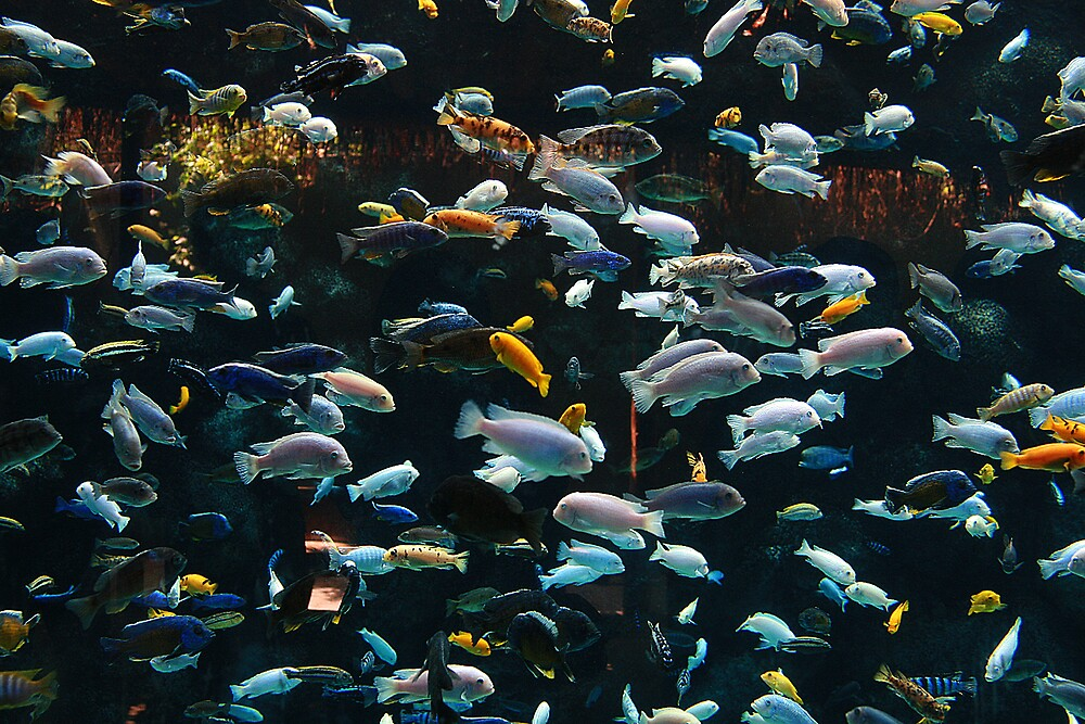 Fish by Mien