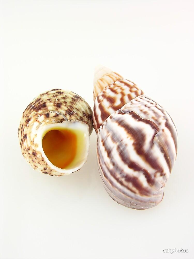 Shells II by cshphotos