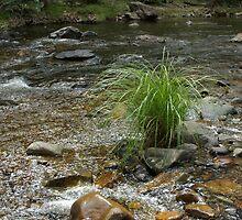 Watergrass by aussieusch