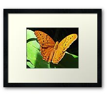 Cruiser Butterfly Melbourne Zoo I Framed Print