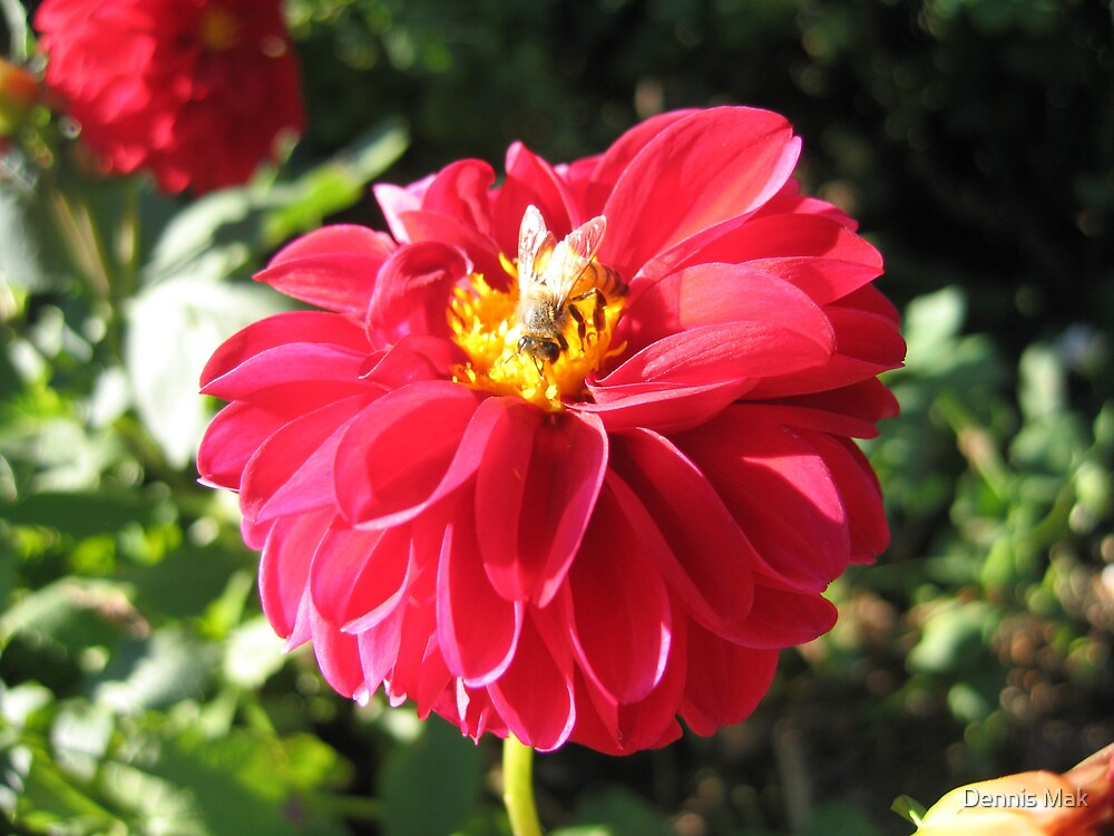 Bee on flower by Dennis Mak