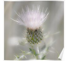 Glimmering Thistle Poster
