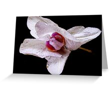 Folding In of Beauty Greeting Card