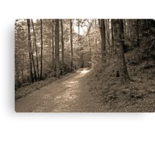 once upon a sunlit path... Canvas Print