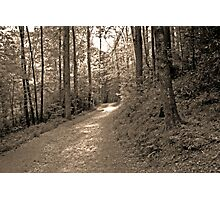 once upon a sunlit path... Photographic Print