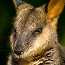 Wannabe a Wallaby by Edward Hor