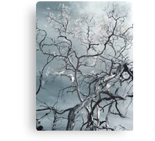 white ghosts shriek and the forest is awake Canvas Print