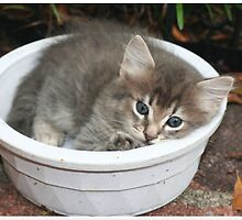bowl of kitty by daniels