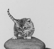 Cat on a Rock by alisonbelinda