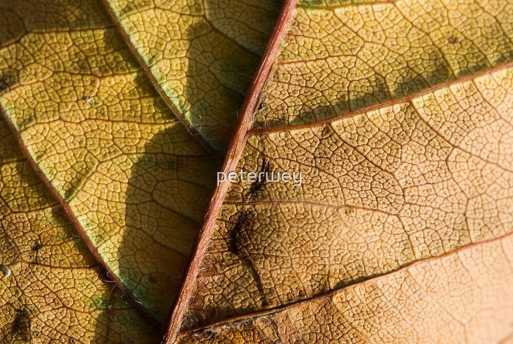 autumn leaf by peterwey