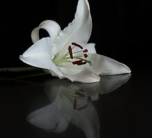 Reflected Beauty by Martie Venter