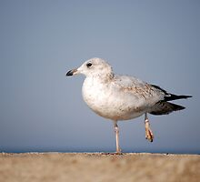 Balancing Bird  by Maria Dryfhout