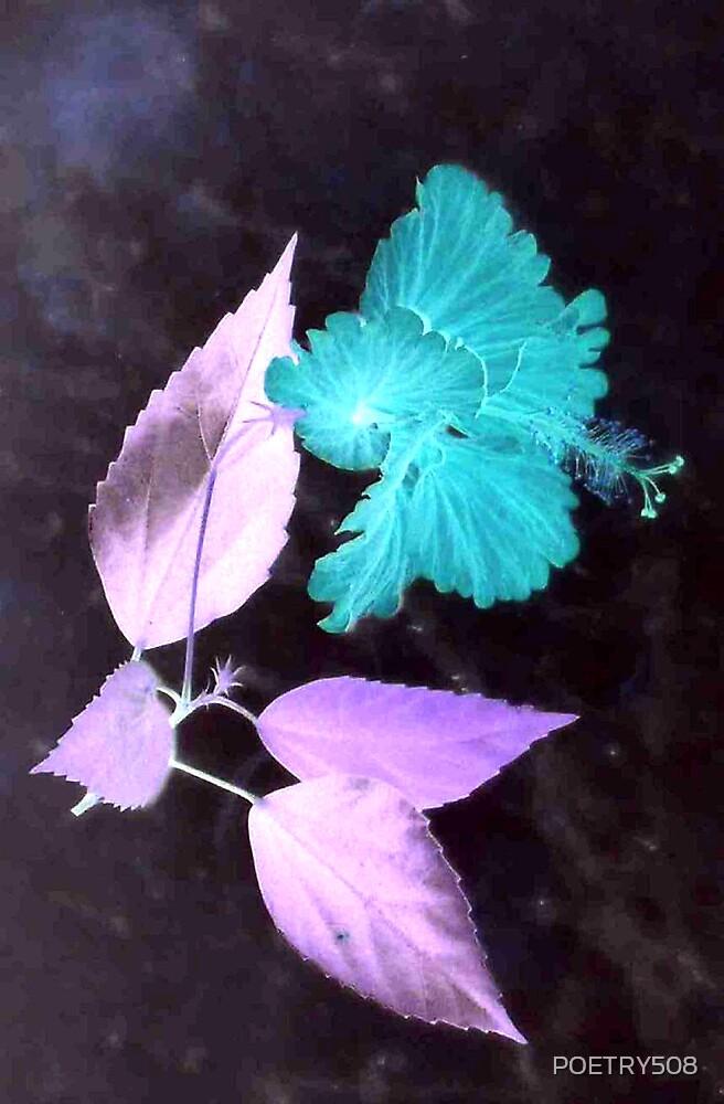 Flowers & Leaves by POETRY508
