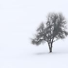 White World...Black Forest by Angelika  Vogel
