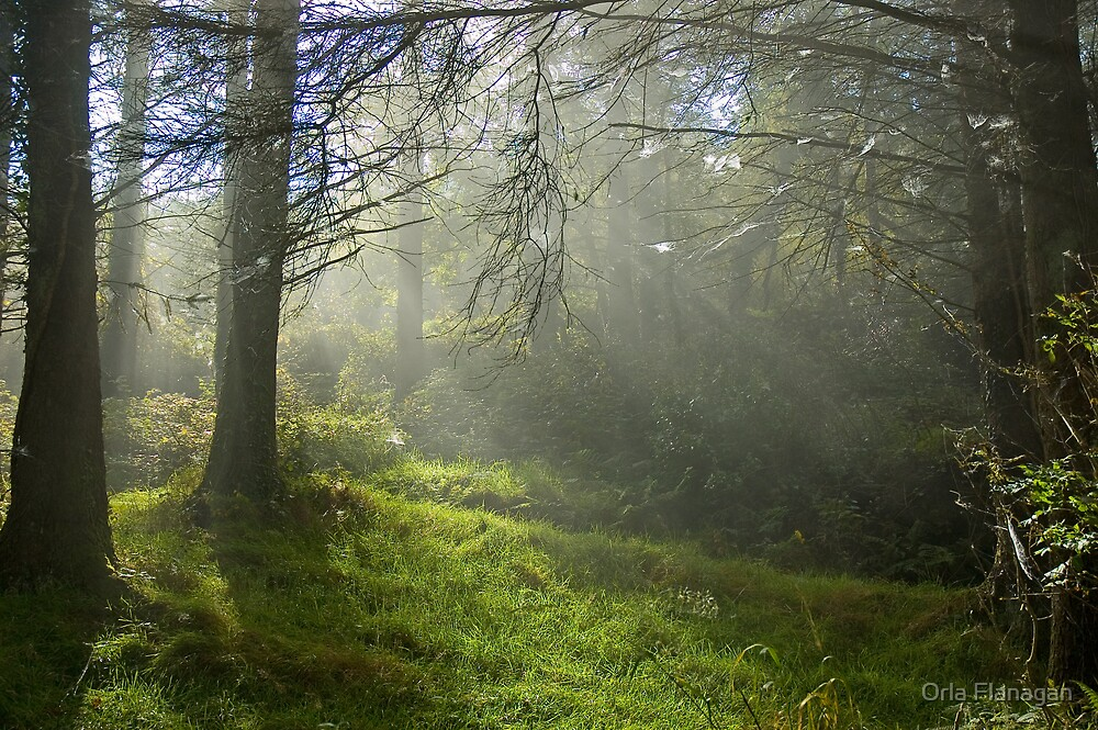 Autumn mist - Ballycuggaran Woods, Ireland by Orla Flanagan
