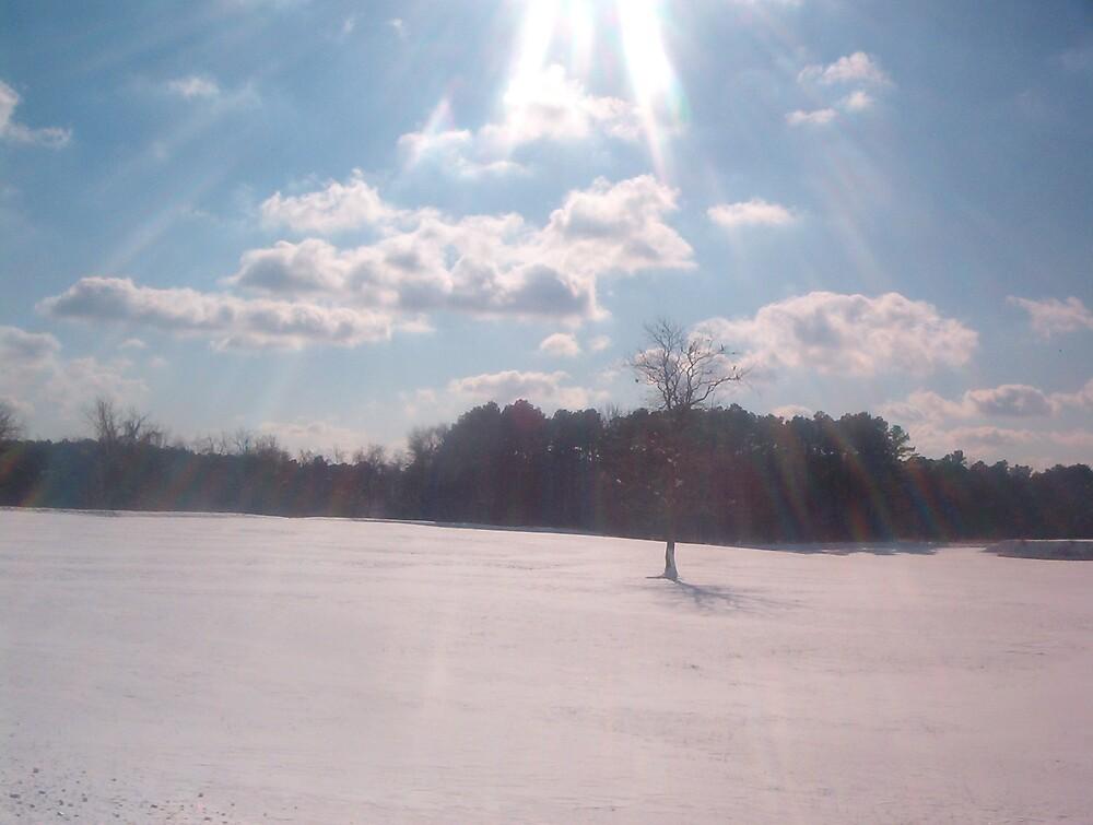 Yorktown Battlefield under snow by Patricia Harduby
