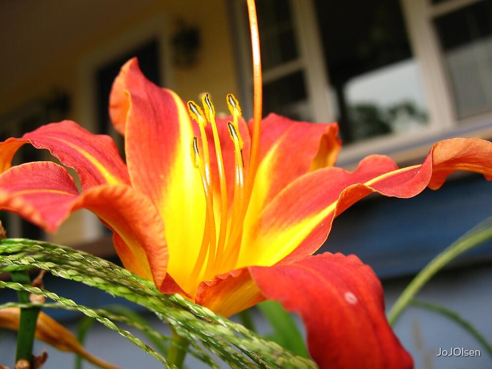 porch flower by JoJOlsen