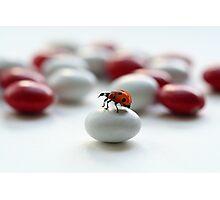 Ladybug :) Photographic Print