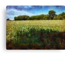 Green wheat field Canvas Print
