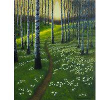 Spring path Photographic Print