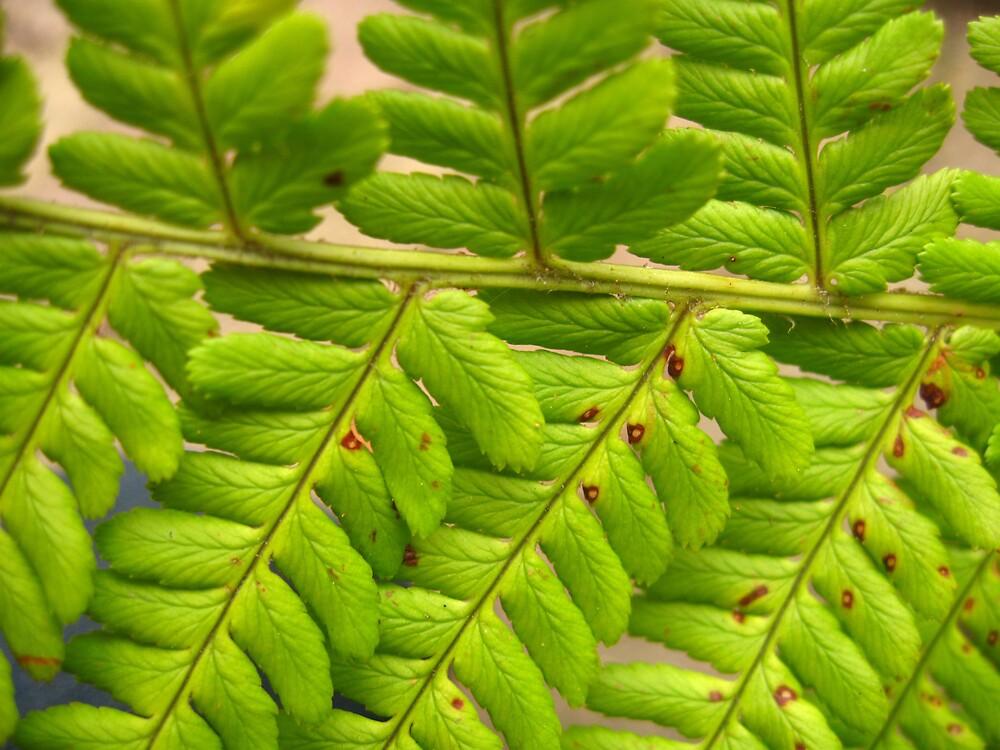 Interlocking leaves by benni6634