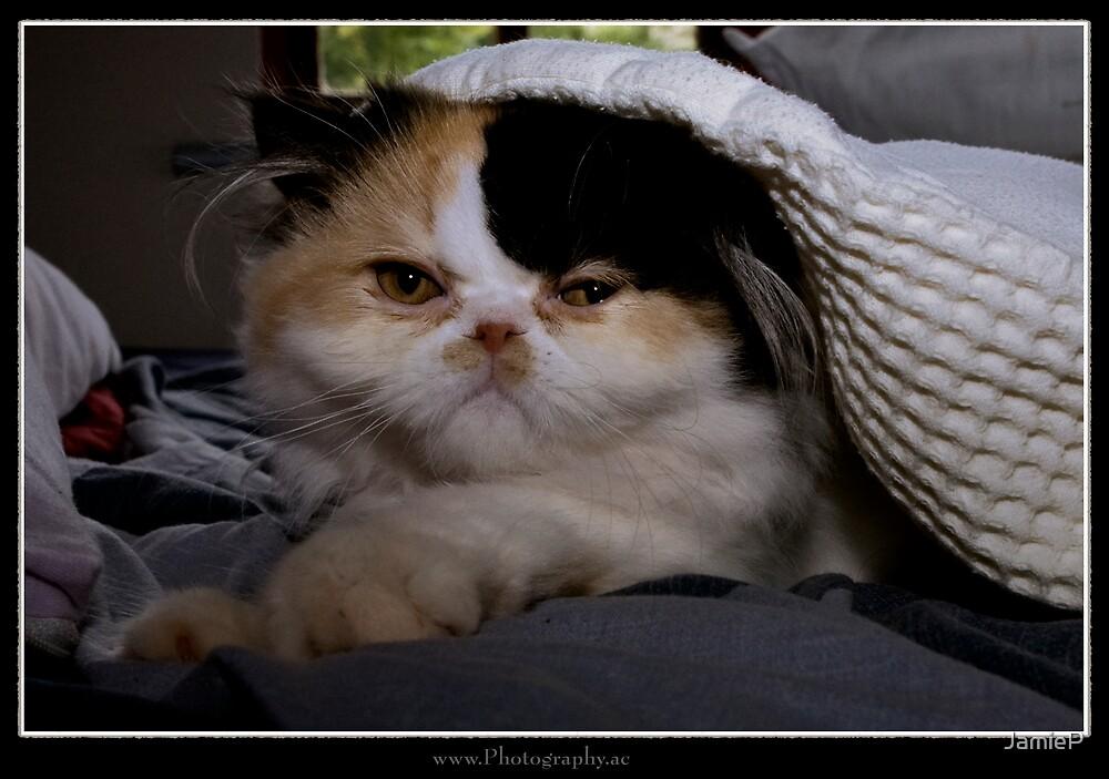 Persian kitten by JamieP