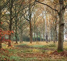 Tree trunks on an autumn morning by Judi Lion