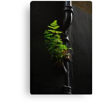 Urban Foliage Canvas Print