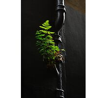 Urban Foliage Photographic Print