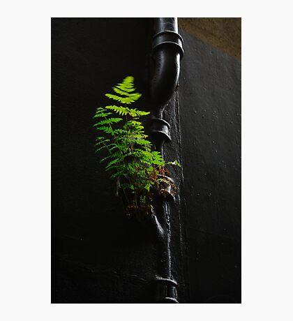 Urban Foliage Photographic Print