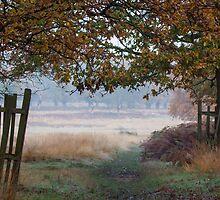 A view across Richmond Park by Judi Lion