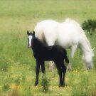 Mare & Foal by Kim Roper