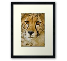 Endangered II Framed Print