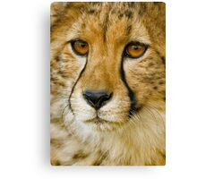 Endangered II Canvas Print