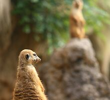 Meerkat on Guard by christopherliao