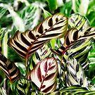 Dancing Leaves by Kasia-D