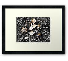 Black and White colorized leaves Framed Print