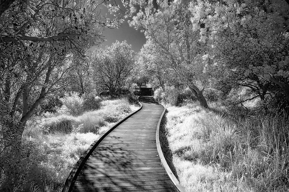 Winding path in IR by Trent Wallis
