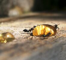 Ants with Honey by Shara