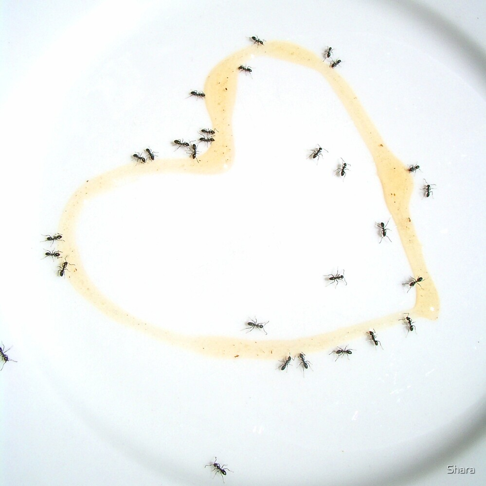 Ants & Sweet Heart by Shara