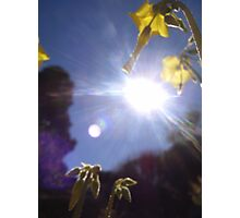 A Bug's Life Part 1 Photographic Print