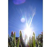 Sparkling Sun Photographic Print