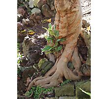 Twisted Roots Photographic Print