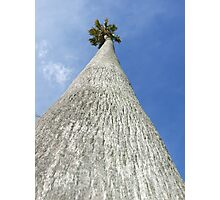 The tallest tree I have ever seen! Photographic Print