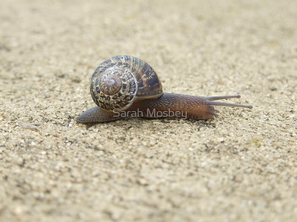 Mr. Snail by Sarah Mosbey