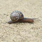 Mr. Snail by Sarah Mosbey