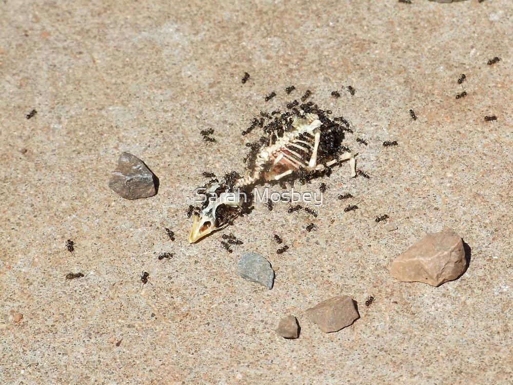Skeletor!! by Sarah Mosbey