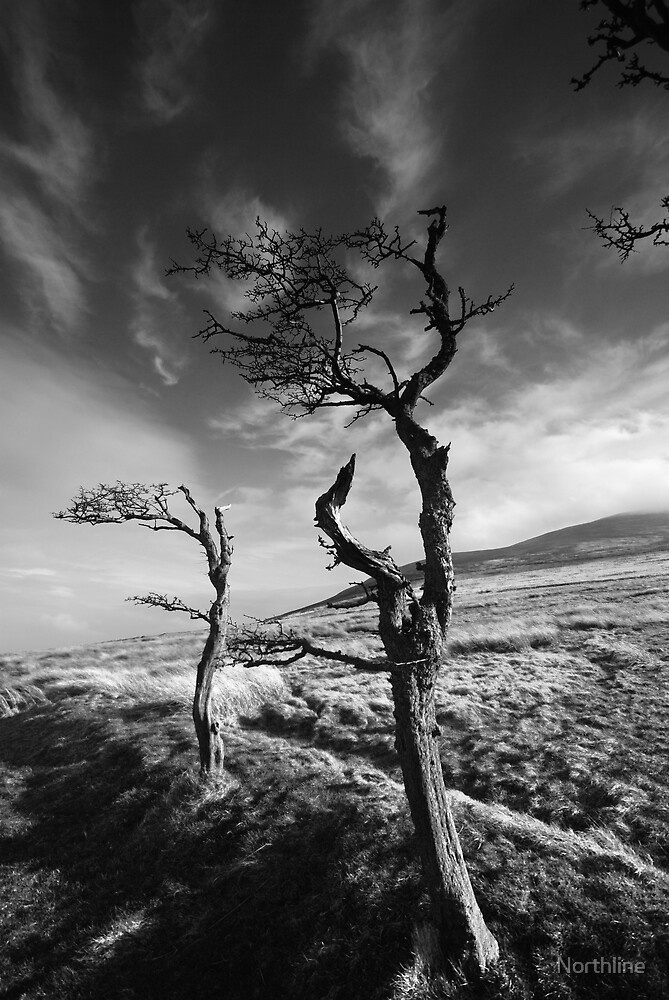Wind & Wuthering II by Northline